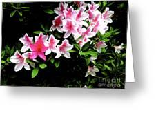 09032015049 Greeting Card