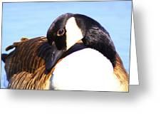 0932 - Canada Goose Greeting Card