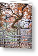 0981 Fall Colors At Starved Rock State Park Greeting Card