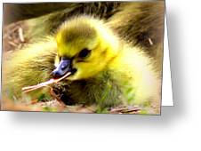 0983 - Canada Goose Greeting Card