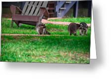 #01 Raccoon Race Greeting Card
