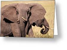 1-elephant Greeting Card