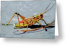 15- Lubber Grasshopper Greeting Card