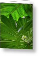 4327 - Leaves Greeting Card