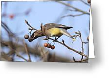 4427 - Cedar Waxwing Greeting Card