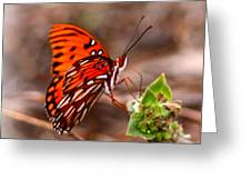 4534 - Butterfly Greeting Card