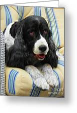 #940 D1031 Farmer Browns Springer Spaniel Greeting Card