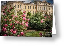 A Beautiful Rose Bush Castle Park 1 Greeting Card