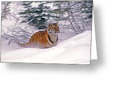 A Blur Of Tiger Greeting Card