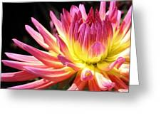 A Burst Of Color Greeting Card