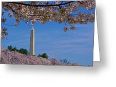 A Capital Cherry Blossom I Greeting Card