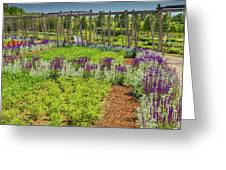 A Corridor Of Purple Sage Flowers And Stachys Lanata Sunlit Greeting Card