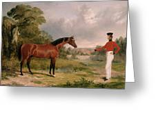 A Horse And A Soldier Greeting Card