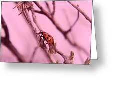 A Ladybug   Greeting Card