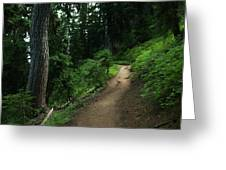 A Path In Paradise Greeting Card
