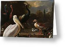 A Pelican And Other Birds Near A Pool, Known As The Floating Feather, Melchior D Hondecoeter, Greeting Card
