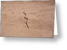 A Snake On The Dirt Greeting Card