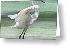A Snowy Egret (egretta Thula) At Mahoe Greeting Card