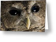 A Threatened Northern Spotted Owl Greeting Card by Joel Sartore