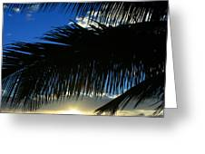 A Tropical Sensation Greeting Card
