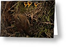 A Visit To The Nest Greeting Card