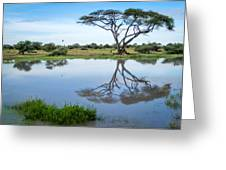 Acacia Tree Reflection Greeting Card