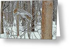 Acrobat Of The Forest Greeting Card