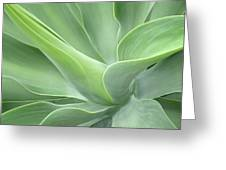 Agave Attenuata Abstract Greeting Card