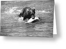 Alaska: Brown Bear Greeting Card