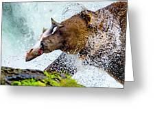 Alaska Brown Bear Greeting Card