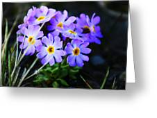 Alaskan Wild Flowers Greeting Card