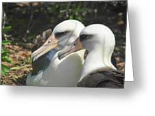 Albatross Lovers Greeting Card