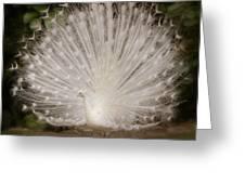 Albino Peacock  Greeting Card