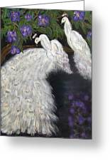 Albino Peacocks Greeting Card