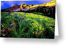 Albion Basin Greeting Card