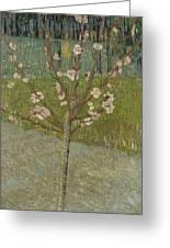 Almond Tree In Blossom Arles, April 1888 Vincent Van Gogh 1853 - 1890 Greeting Card
