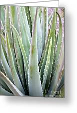 Aloe Vera Plant Greeting Card