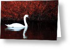 Along The Shores Of Avalon Greeting Card