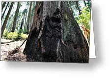 Alta Vista Giant Sequoia Greeting Card