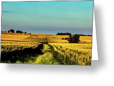 Amber Waves Of Grain Greeting Card