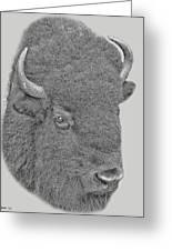 American Bison Greeting Card by Larry Linton