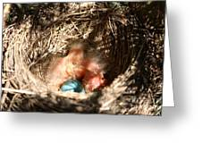 American Robin Nestlings Greeting Card