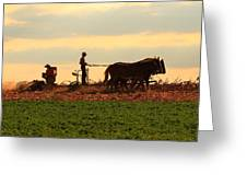 Amish Farmer Greeting Card
