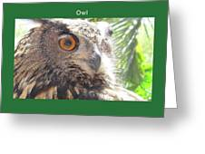 An Owl's Curiousity Greeting Card