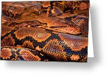 Anaconda Greeting Card