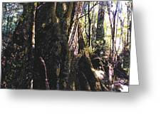 Ancient Pandanii Cradle Mountain Gondwana Rainforest Greeting Card