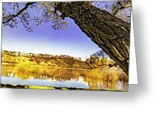 Ancient Trees Greeting Card