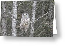 Angel Owl Greeting Card