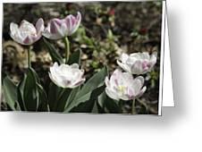 Angelique Peony Tulips Greeting Card