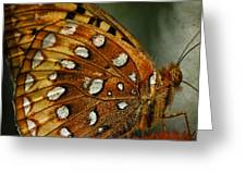 Aphrodite Fritillary 1 Greeting Card